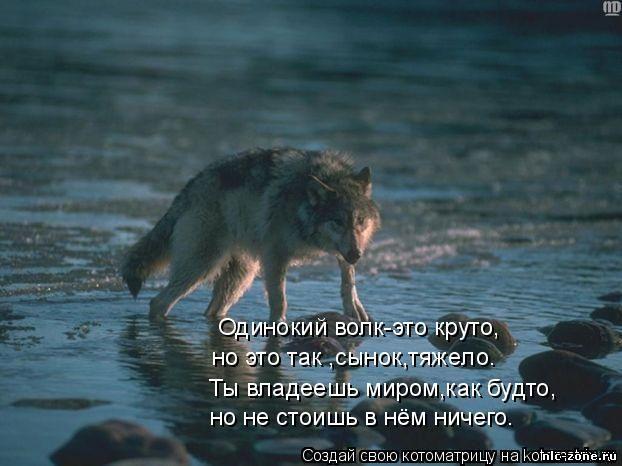 Скачать про волков песню воют